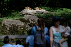 May 31, 2019: Senator Lindsey Williams visits the Pittsburgh Zoo and Aquarium.